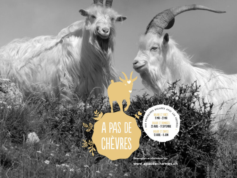 Création logo A pas de chèvres